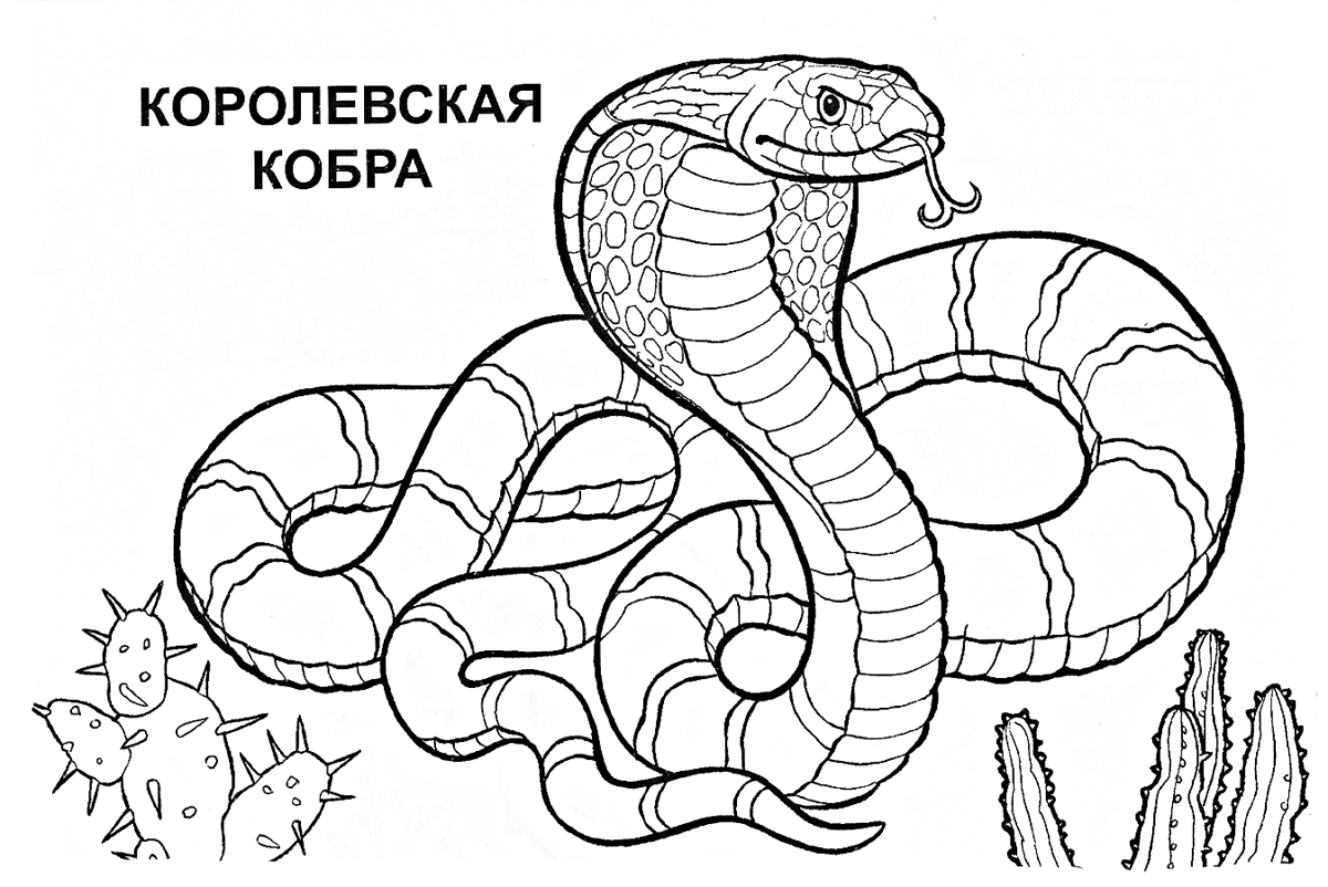 King cobra drawing for kids
